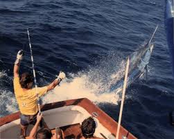 Marlin Fishing in St. Thomas